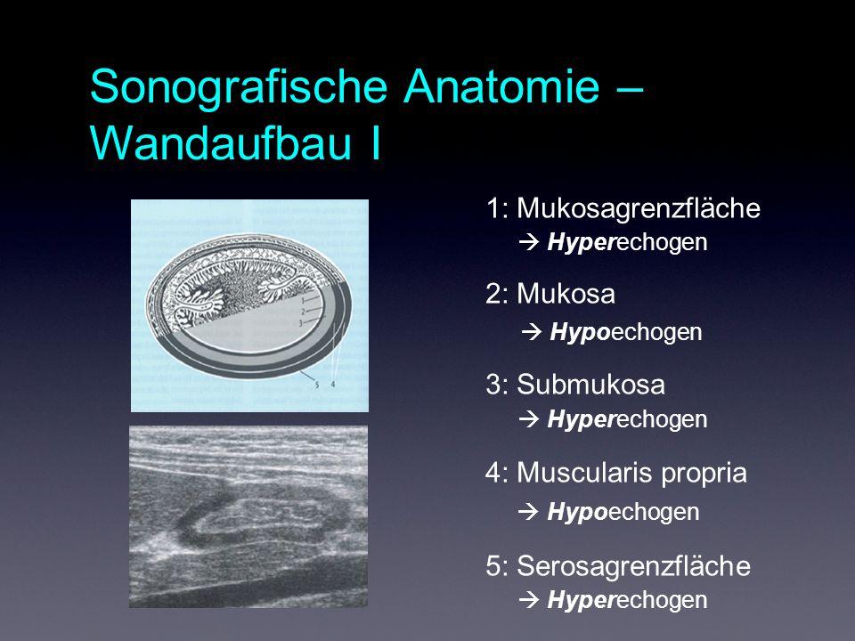 1: Mukosagrenzfläche Hyperechogen 2: Mukosa Hypoechogen 3: Submukosa Hyperechogen 4: Muscularis propria Hypoechogen 5: Serosagrenzfläche Hyperechogen Sonografische Anatomie – Wandaufbau I