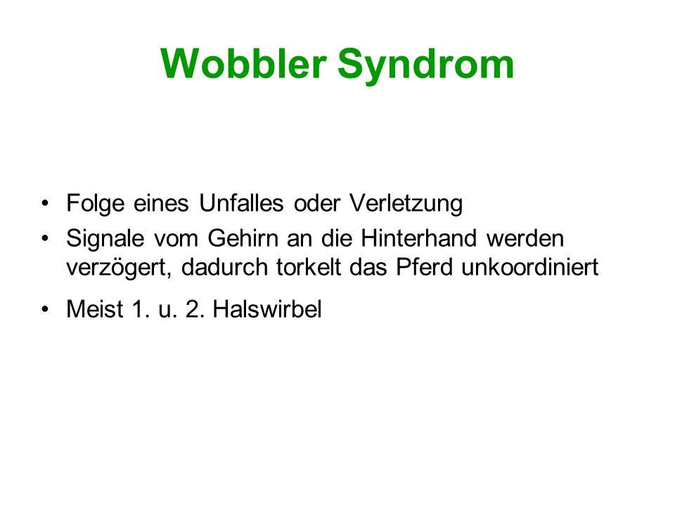 Wirkung Organe Schiefer Schweif (Hamstrings) Arthritis (Versorgung d.