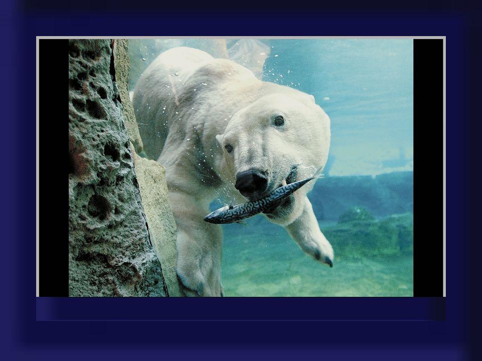 Der Besucher des Zoo am Meer bekommt einen Eindruck vom Lebensraum der Eisbären, Polarfüchse, Seehunde, Seebären und Pinguine: karge, bizarre Eiswüste
