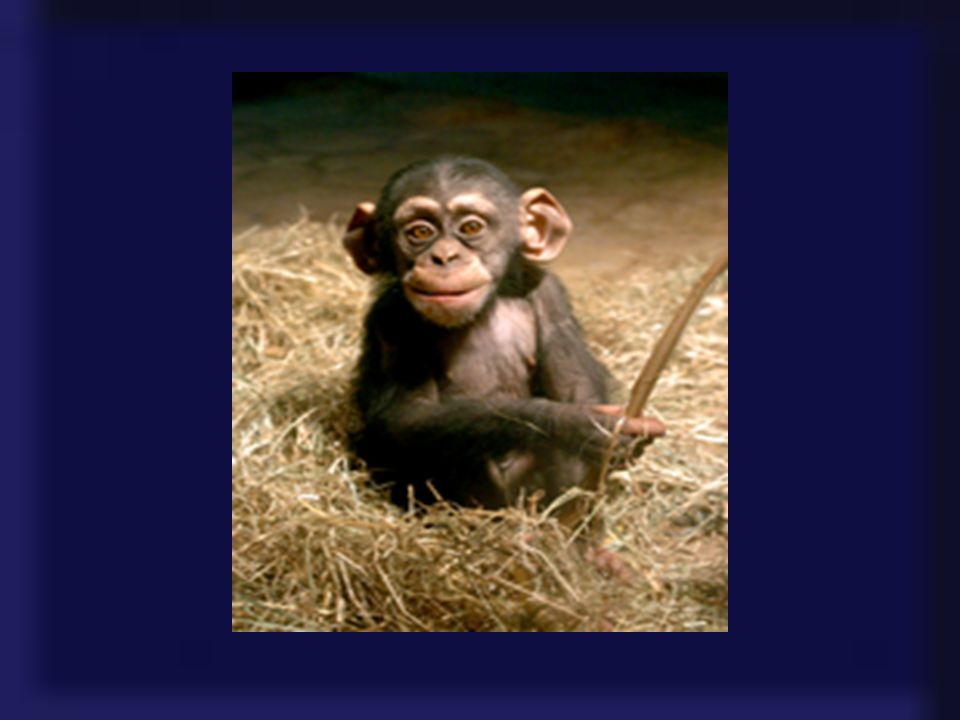 Aber Ausnahmen bestätigen bekanntlich die Regel. Affen, die durch die Tradition der Seefahrt in Bremerhaven bedingt eine Beziehung zu diesem Ort haben