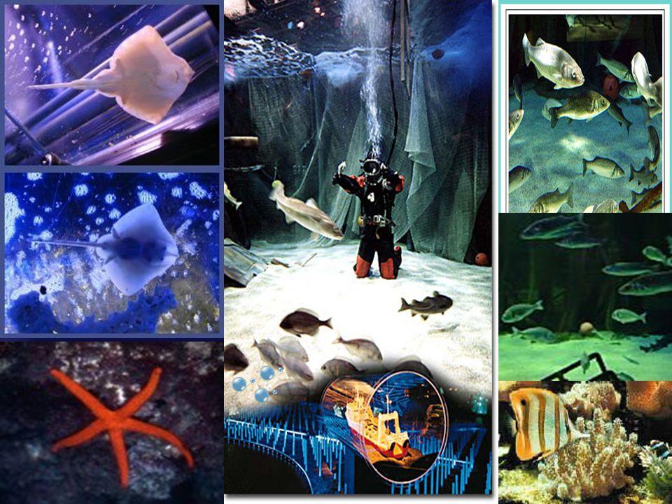 Spannende Informationen über das Meer und den Fisch, präsentiert mit modernster Technik. Erlebt man dem Spiegelkaleidoskop die Entstehung der Erde, de