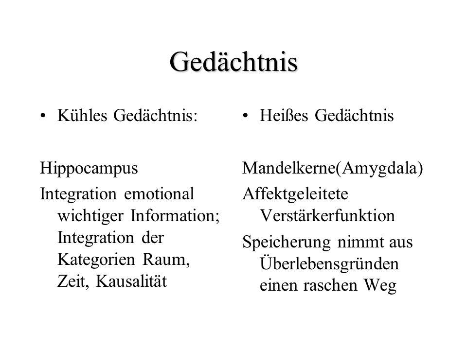 Gedächtnis Kühles Gedächtnis: Hippocampus Integration emotional wichtiger Information; Integration der Kategorien Raum, Zeit, Kausalität Heißes Gedäch