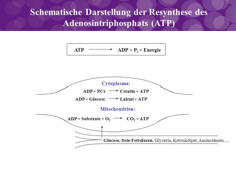 Schematische Darstellung der Resynthese des Adenosintriphosphats (ATP) Glucose, freie Fettsäuren, Glycerin, Ketonkörper, Aminosäuren,... Cytoplasma: A