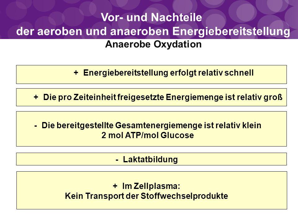 Vor- und Nachteile der aeroben und anaeroben Energiebereitstellung Anaerobe Oxydation - Laktatbildung - Die bereitgestellte Gesamtenergiemenge ist rel