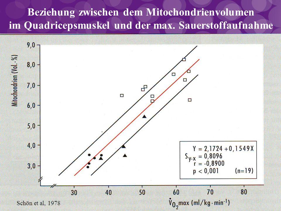 Schön et al, 1978 Beziehung zwischen dem Mitochondrienvolumen im Quadricepsmuskel und der max. Sauerstoffaufnahme