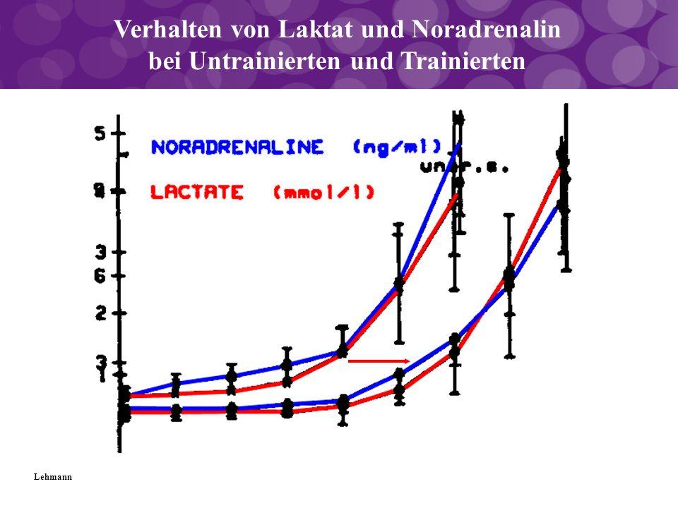 Verhalten von Laktat und Noradrenalin bei Untrainierten und Trainierten Lehmann