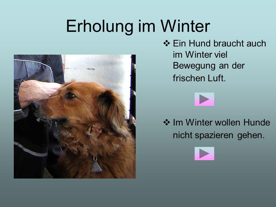 Erholung im Winter Ein Hund braucht auch im Winter viel Bewegung an der frischen Luft. Im Winter wollen Hunde nicht spazieren gehen.