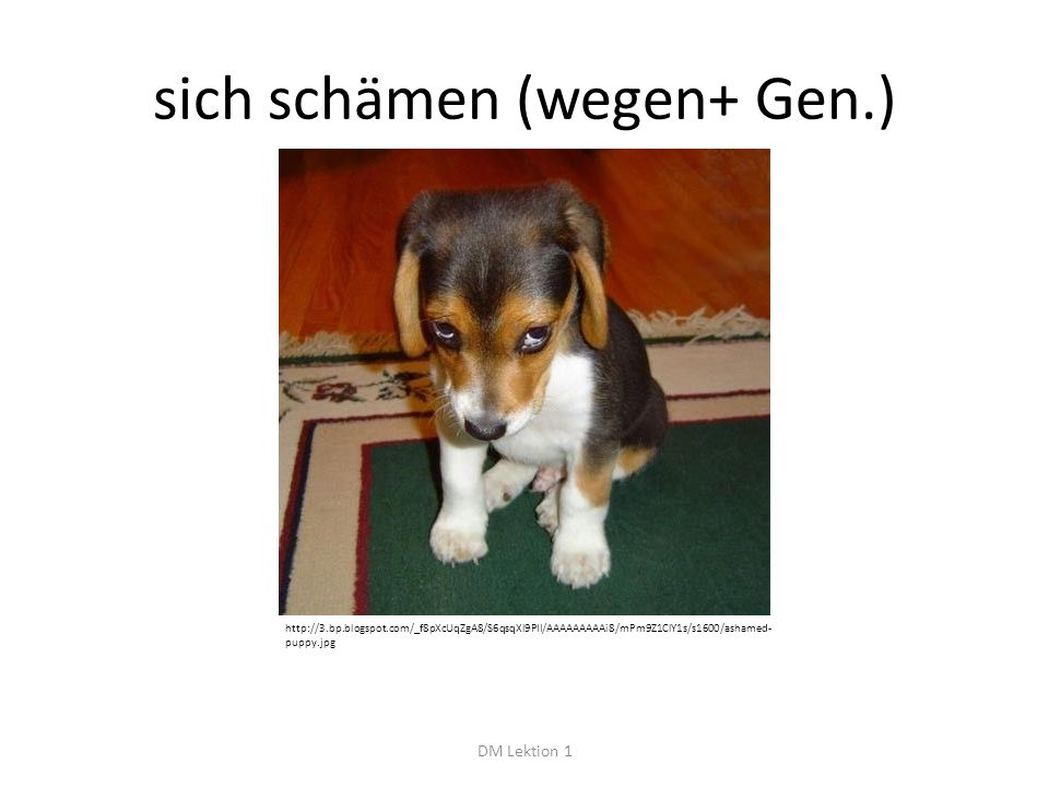 sich schämen (wegen+ Gen.) DM Lektion 1 http://3.bp.blogspot.com/_f8pXcUqZgA8/S6qsqXl9PII/AAAAAAAAAi8/mPm9Z1ClY1s/s1600/ashamed- puppy.jpg