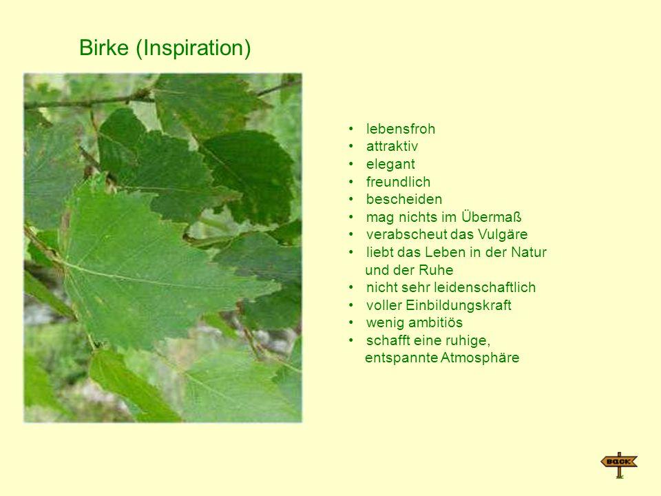 Birke (Inspiration) lebensfroh attraktiv elegant freundlich bescheiden mag nichts im Übermaß verabscheut das Vulgäre liebt das Leben in der Natur und der Ruhe nicht sehr leidenschaftlich voller Einbildungskraft wenig ambitiös schafft eine ruhige, entspannte Atmosphäre