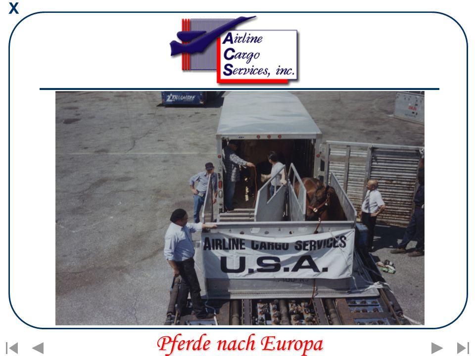 X Pferde nach Europa