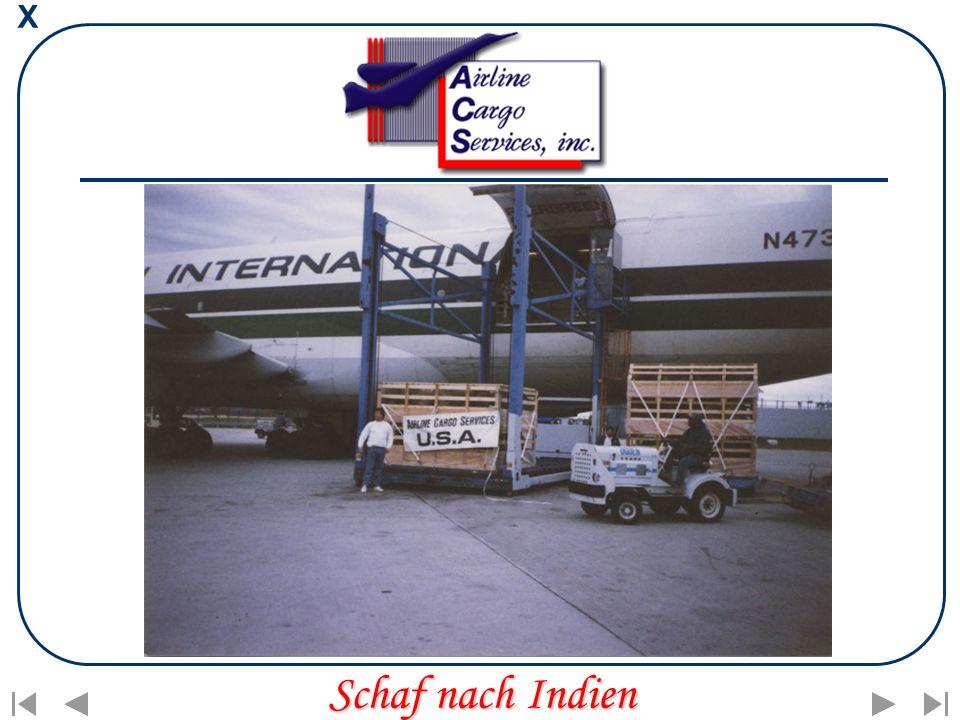 X Schaf nach Indien
