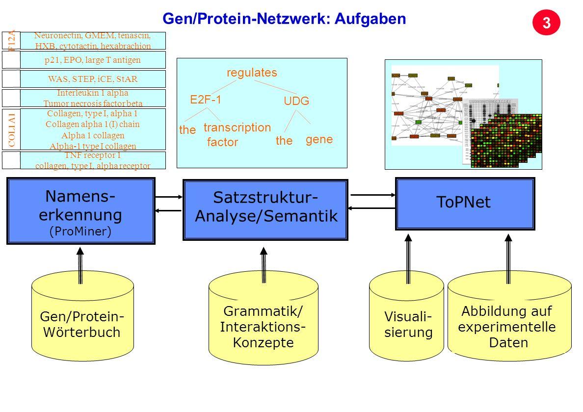 Seite 31 Archivierungsangaben Gen/Protein- Wörterbuch Grammatik/ Interaktions- Konzepte Visuali- sierung Abbildung auf experimentelle Daten Namens- er