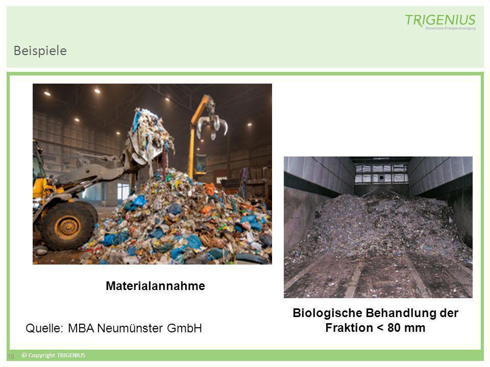 © Copyright TRIGENIUS 18 Beispiele Biologische Behandlung der Fraktion < 80 mm Materialannahme Quelle: MBA Neumünster GmbH