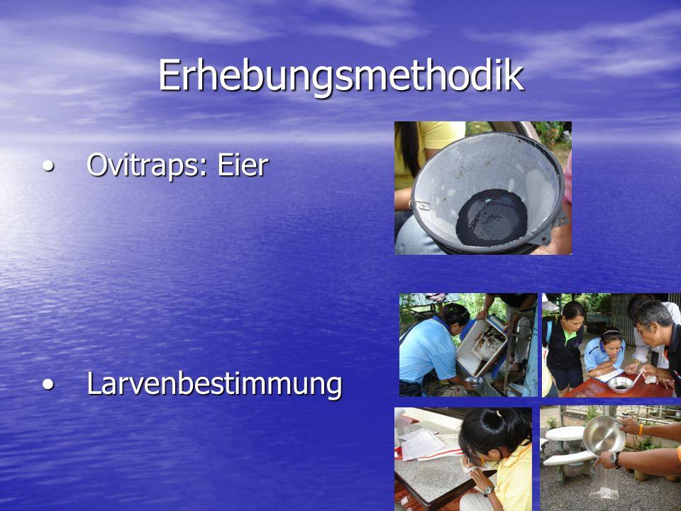 Erhebungsmethodik Ovitraps: EierOvitraps: Eier LarvenbestimmungLarvenbestimmung
