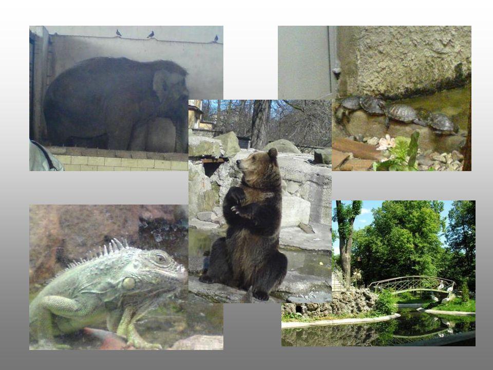 Der Tiergarten Seit den 1947 – er Jahren ist er geoeffnet. Dort gibt es circa 400 Tierarten und 150 Pflanzarten.