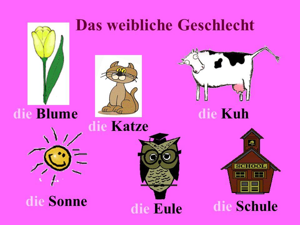 Das weibliche Geschlecht die Blume die Katze die Kuh die Sonne die Eule die Schule