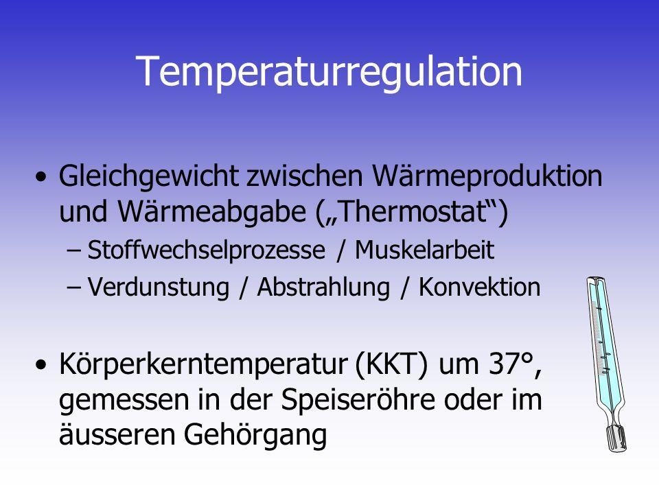 Temperaturregulation Gleichgewicht zwischen Wärmeproduktion und Wärmeabgabe (Thermostat) –Stoffwechselprozesse / Muskelarbeit –Verdunstung / Abstrahlu