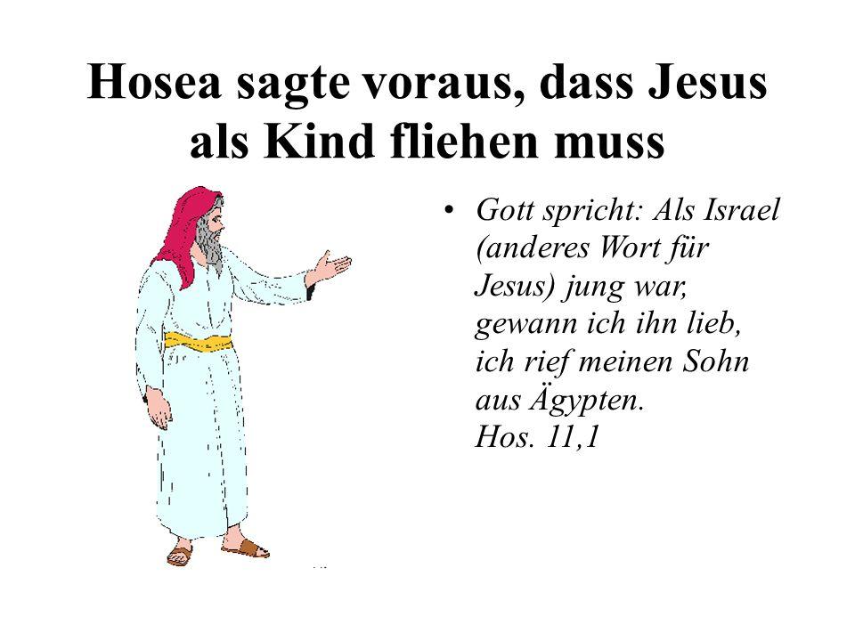 Hosea sagte voraus, dass Jesus als Kind fliehen muss Gott spricht: Als Israel (anderes Wort für Jesus) jung war, gewann ich ihn lieb, ich rief meinen Sohn aus Ägypten.