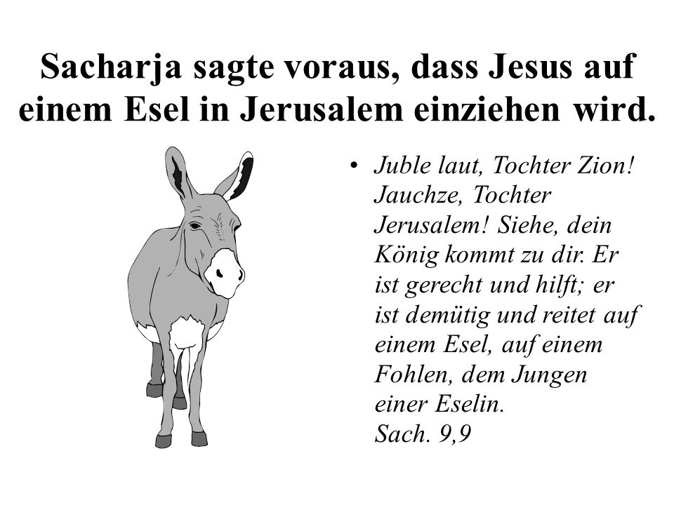 Sacharja sagte voraus, dass Jesus auf einem Esel in Jerusalem einziehen wird. Juble laut, Tochter Zion! Jauchze, Tochter Jerusalem! Siehe, dein König