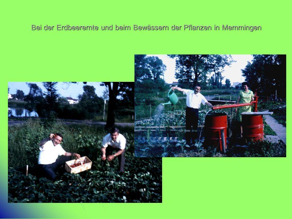 Bei der Erdbeerernte und beim Bewässern der Pflanzen in Memmingen