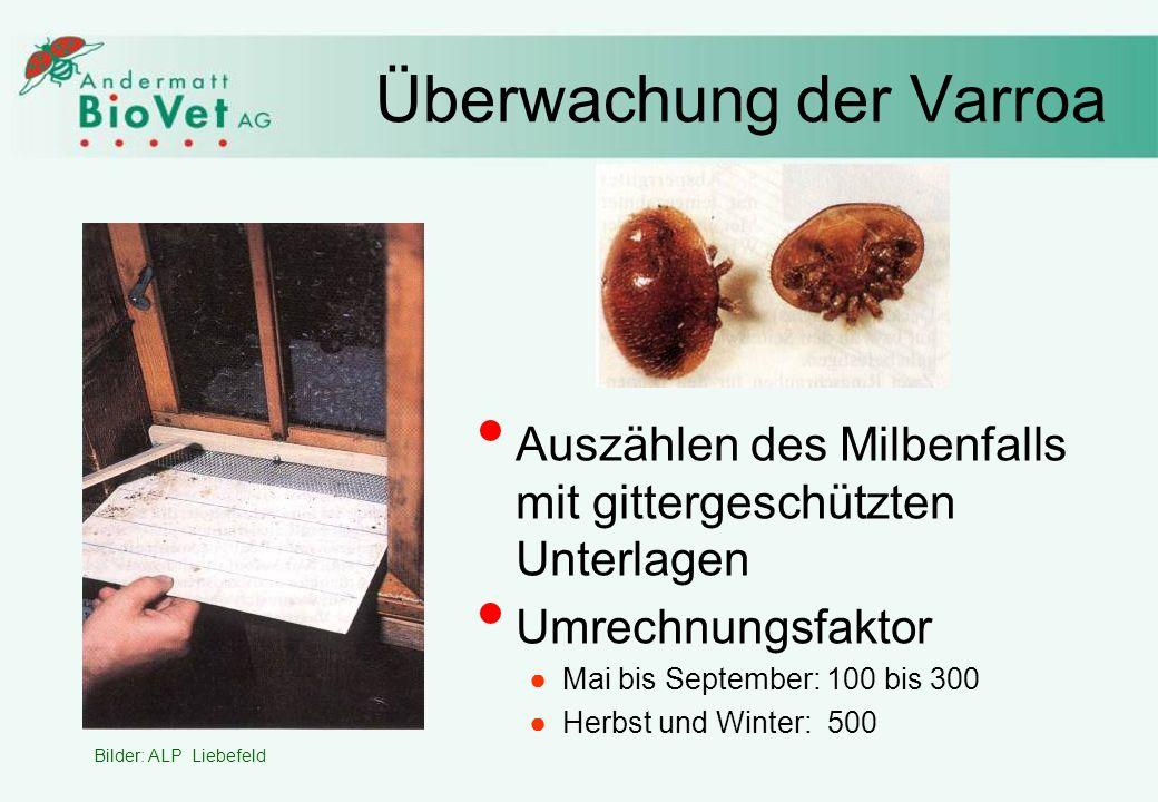 Überwachung der Varroa Bilder: ALP Liebefeld Auszählen des Milbenfalls mit gittergeschützten Unterlagen Umrechnungsfaktor Mai bis September: 100 bis 300 Herbst und Winter: 500