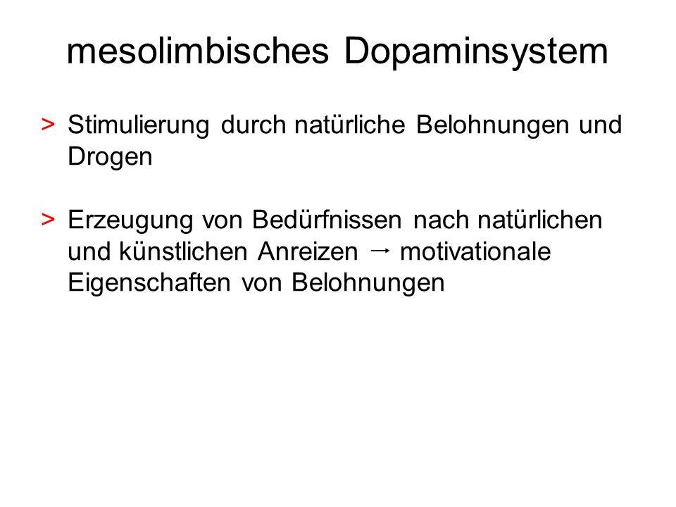 mesolimbisches Dopaminsystem > Stimulierung durch natürliche Belohnungen und Drogen > Erzeugung von Bedürfnissen nach natürlichen und künstlichen Anre