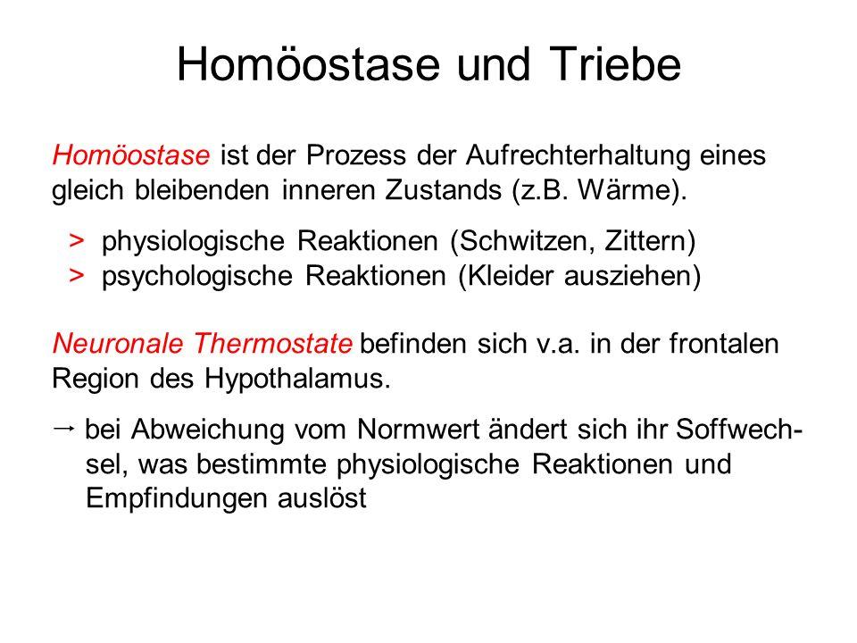 Homöostase und Triebe Homöostase ist der Prozess der Aufrechterhaltung eines gleich bleibenden inneren Zustands (z.B. Wärme). >physiologische Reaktion