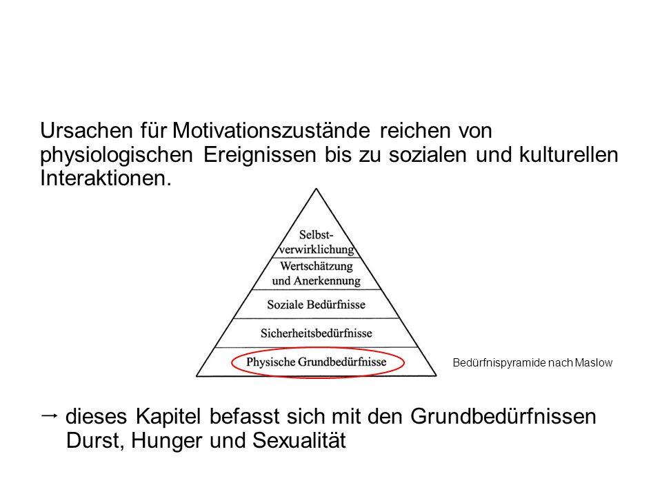 Ursachen für Motivationszustände reichen von physiologischen Ereignissen bis zu sozialen und kulturellen Interaktionen. dieses Kapitel befasst sich mi