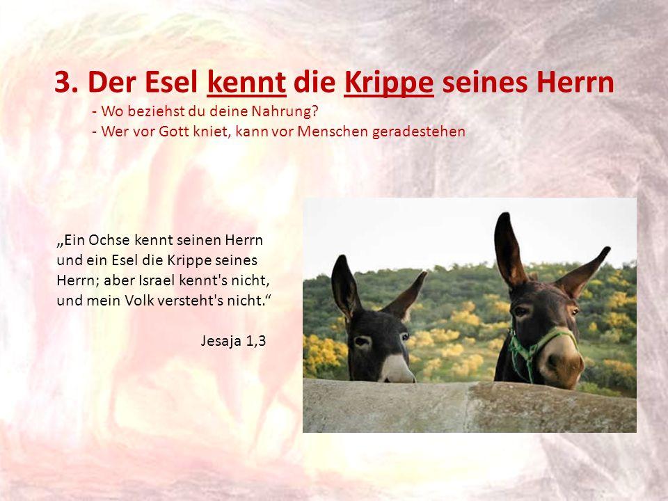 3. Der Esel kennt die Krippe seines Herrn - Wo beziehst du deine Nahrung? - Wer vor Gott kniet, kann vor Menschen geradestehen Ein Ochse kennt seinen