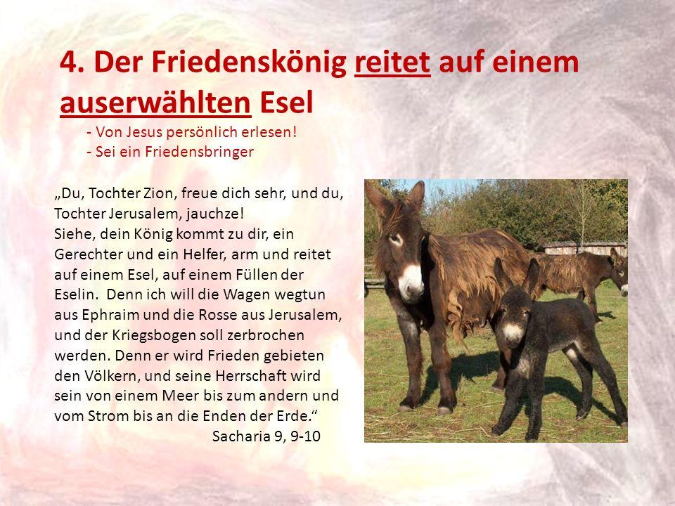 4. Der Friedenskönig reitet auf einem auserwählten Esel - Von Jesus persönlich erlesen! - Sei ein Friedensbringer Du, Tochter Zion, freue dich sehr, u