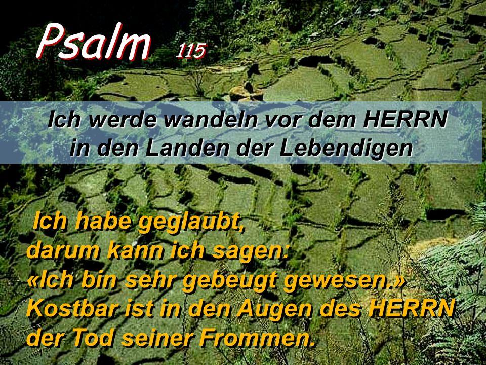 Psalm 115 Ich werde wandeln vor dem HERRN in den Landen der Lebendigen Ich habe geglaubt, darum kann ich sagen: «Ich bin sehr gebeugt gewesen.» Kostbar ist in den Augen des HERRN der Tod seiner Frommen.