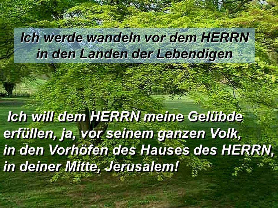 Ich werde wandeln vor dem HERRN in den Landen der Lebendigen Ich will dem HERRN meine Gelübde erfüllen, ja, vor seinem ganzen Volk, in den Vorhöfen des Hauses des HERRN, in deiner Mitte, Jerusalem.