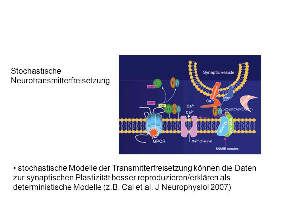 Stochastische Neurotransmitterfreisetzung stochastische Modelle der Transmitterfreisetzung können die Daten zur synaptischen Plastizität besser reprod
