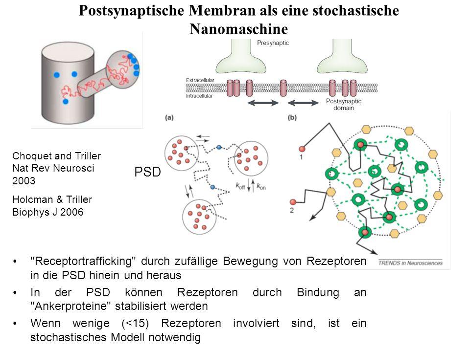 Postsynaptische Membran als eine stochastische Nanomaschine Choquet and Triller Nat Rev Neurosci 2003 Holcman & Triller Biophys J 2006 PSD