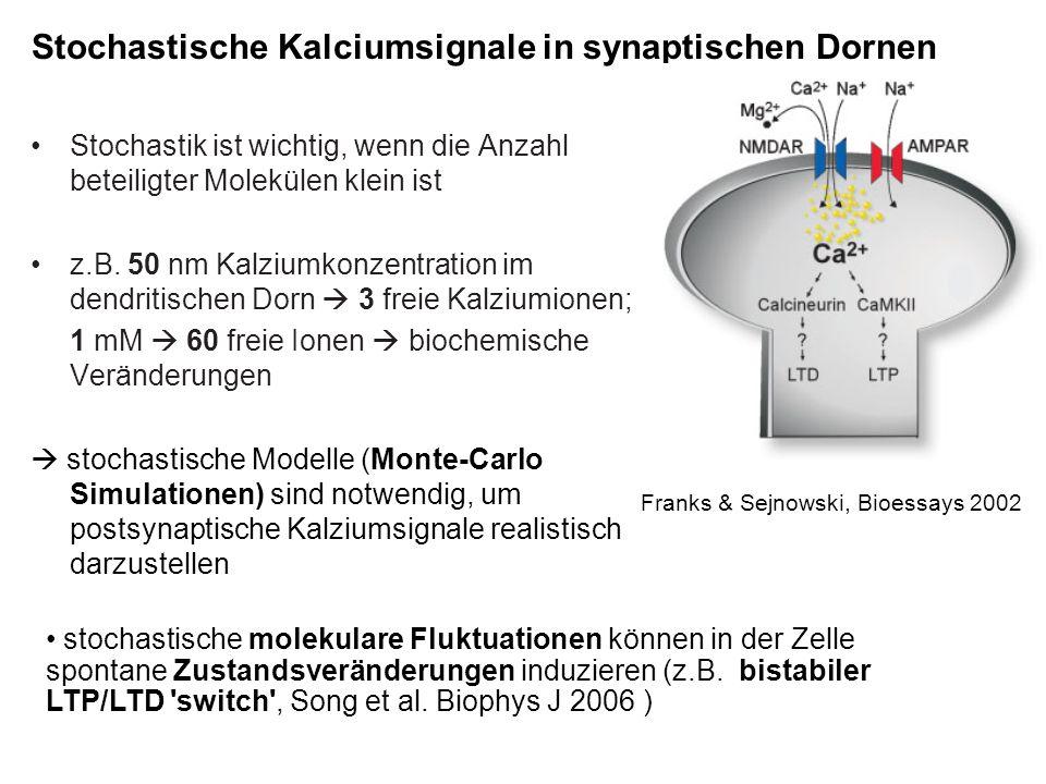 Stochastische Kalciumsignale in synaptischen Dornen Stochastik ist wichtig, wenn die Anzahl beteiligter Molekülen klein ist z.B. 50 nm Kalziumkonzentr