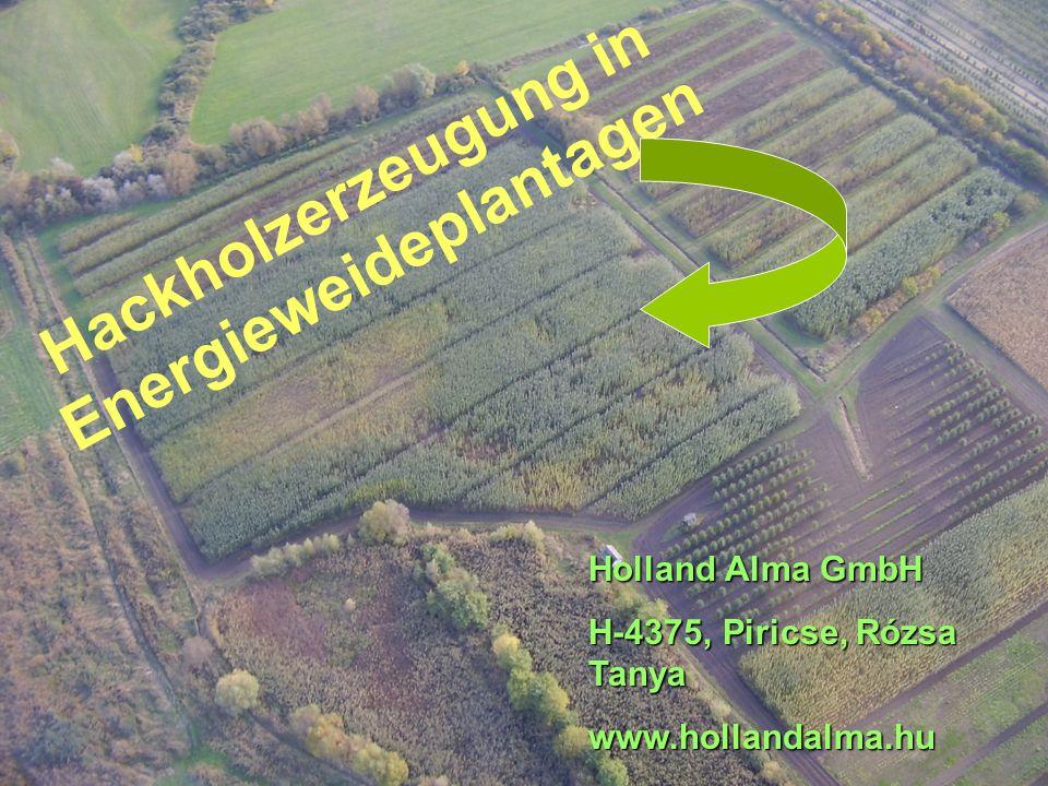 Hackholzerzeugung in Energieweideplantagen Holland Alma GmbH H-4375, Piricse, Rózsa Tanya www.hollandalma.hu