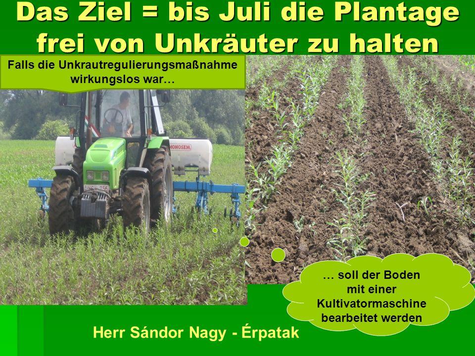 Das Ziel = bis Juli die Plantage frei von Unkräuter zu halten … soll der Boden mit einer Kultivatormaschine bearbeitet werden Herr Sándor Nagy - Érpatak Falls die Unkrautregulierungsmaßnahme wirkungslos war…
