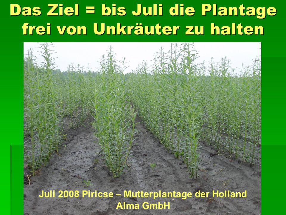 Das Ziel = bis Juli die Plantage frei von Unkräuter zu halten Juli 2008 Piricse – Mutterplantage der Holland Alma GmbH