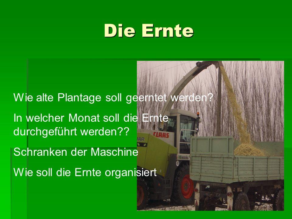 Die Ernte Wie alte Plantage soll geerntet werden.