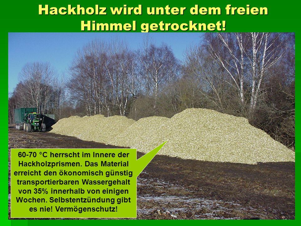 Hackholz wird unter dem freien Himmel getrocknet. 60-70 °C herrscht im Innere der Hackholzprismen.