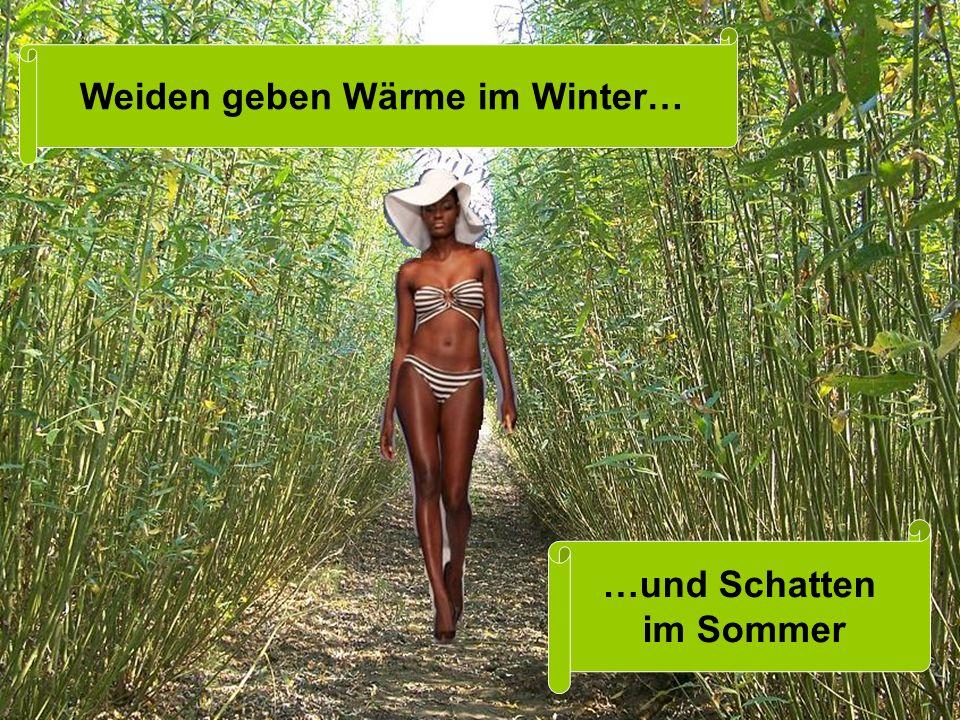 Weiden geben Wärme im Winter… …und Schatten im Sommer