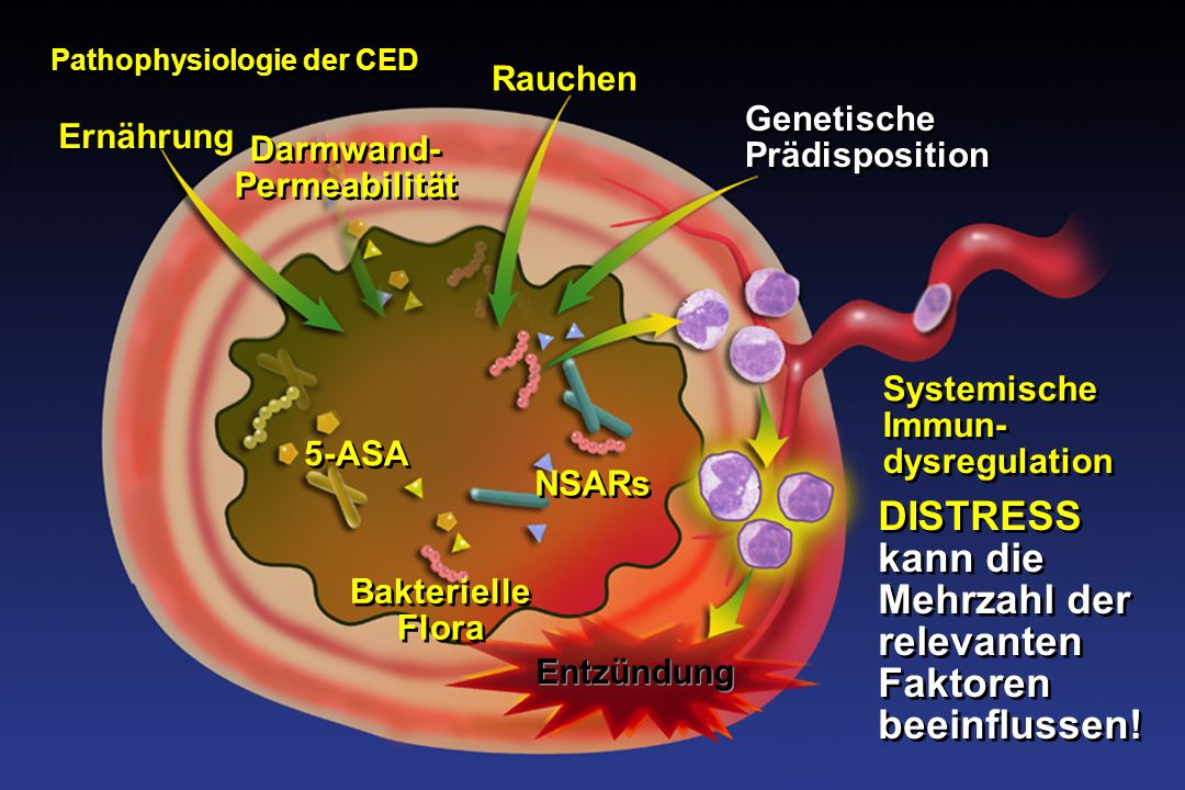 Entzündung Pathophysiologie der CED Ernährung Bakterielle Flora NSARs Rauchen Darmwand- Permeabilität Systemische Immun- dysregulation Genetische Prädisposition 5-ASA DISTRESS kann die Mehrzahl der relevanten Faktoren beeinflussen.