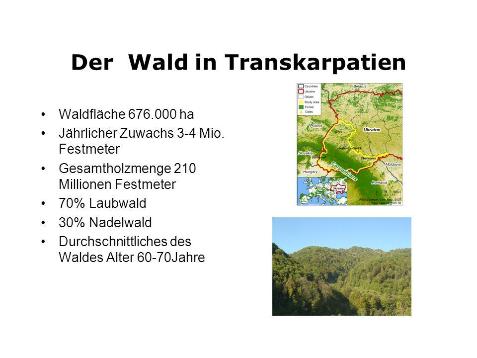 Holzeinschlag und Weiterverarbeitung in Transkarpatien Holzeinschlag in 2008 ca.