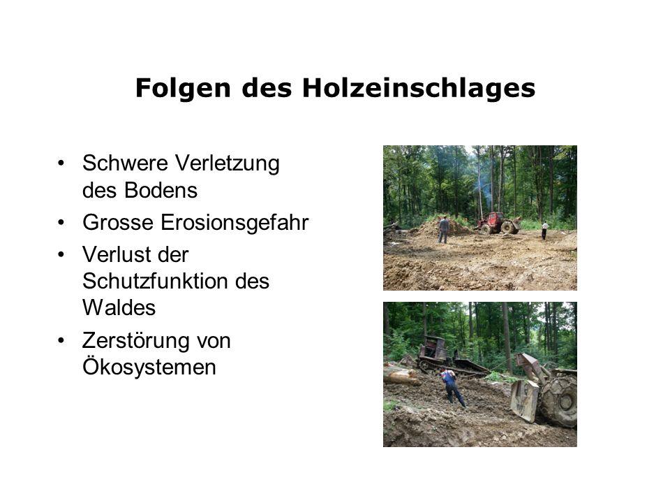 Folgen des Holzeinschlages Schwere Verletzung des Bodens Grosse Erosionsgefahr Verlust der Schutzfunktion des Waldes Zerstörung von Ökosystemen