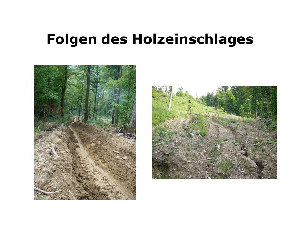 Folgen des Holzeinschlages