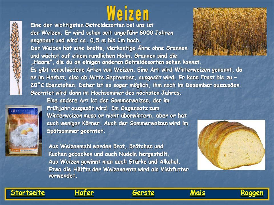 Eine der wichtigsten Getreidesorten bei uns ist Eine der wichtigsten Getreidesorten bei uns ist der Weizen. Er wird schon seit ungefähr 6000 Jahren de