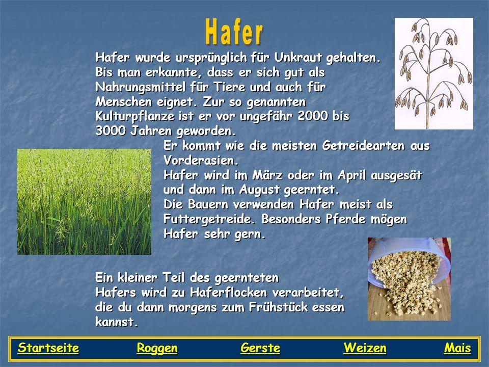 Hafer wurde ursprünglich für Unkraut gehalten. Bis man erkannte, dass er sich gut als Nahrungsmittel für Tiere und auch für Menschen eignet. Zur so ge