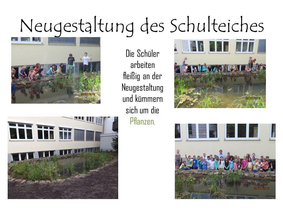 Neugestaltung des Schulteiches Die Schüler arbeiten fleißig an der Neugestaltung und kümmern sich um die Pflanzen.
