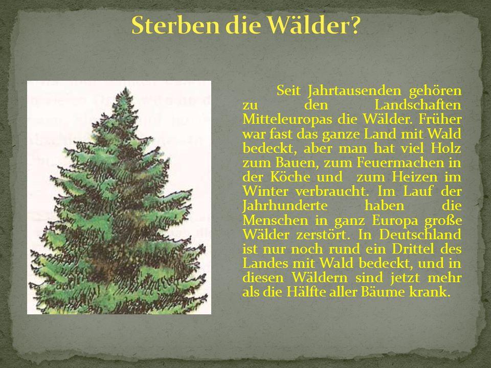 Seit Jahrtausenden gehören zu den Landschaften Mitteleuropas die Wälder. Früher war fast das ganze Land mit Wald bedeckt, aber man hat viel Holz zum B