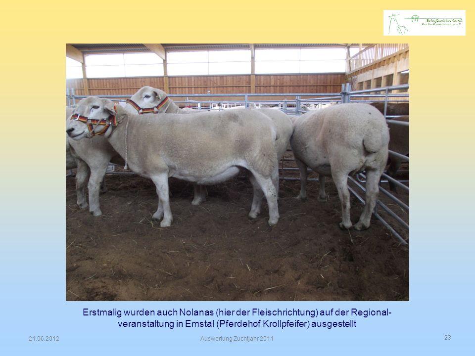 23 21.06.2012Auswertung Zuchtjahr 2011 Erstmalig wurden auch Nolanas (hier der Fleischrichtung) auf der Regional- veranstaltung in Emstal (Pferdehof K